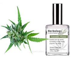 Attract all the hippie chicks and liberal babes on campus as soon as they catch a whiff of the cannabis flower cologne emanating from your hemp shirt and knitted beanie. This rare scent is so pungent, just one or two sprays is all you'll need to carry you through the entire day.