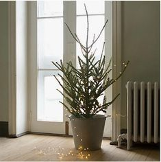 A Christmas Tree by Post: Gardenista. Wow I love this so much.