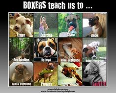 http://dailyboxer.com/wp-content/uploads/2013/08/Daily-Boxer-Collage-with-brand.jpg