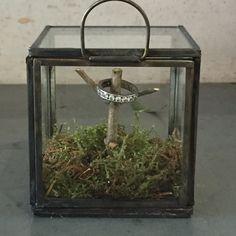 #ringbox Box, Terrarium, Wedding Flowers, Home Decor, Rings, Ideas, Terrariums, Homemade Home Decor, Boxes