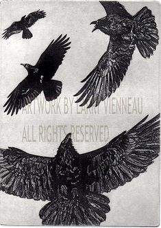 THE DANCE - Raven (crow, bird) Series-   5 x 7 inches Etching Graphite Ink,  2013