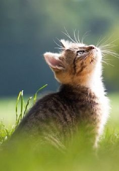 """""""If there is one spot of sun spilling onto the floor, a cat will find it and soak it up."""" --Jean Asper McIntosh"""