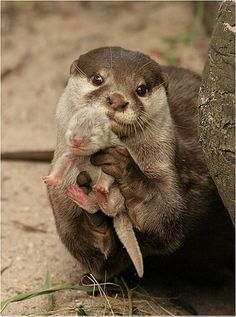 What's cuter than an otter? A tiny otter.