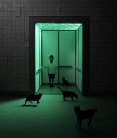 cats, boy, elevator