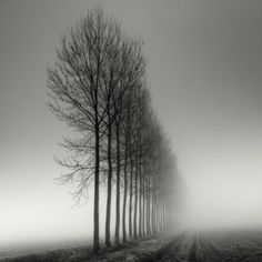Beautiful examples of black and white photos
