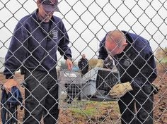 Aurora Fire District lieutenants Tim Gloy, left, and Dave Fincher check on the two feral kittens that Aurora firefighters rescued from the bottom of a deep hole.