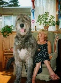 5 Dogs bigger than their owners, big enough :)