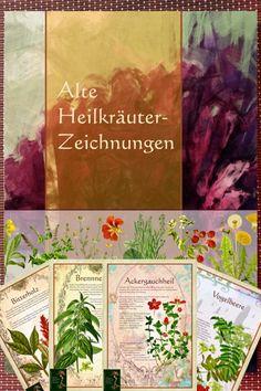 Hardcover-Buch Alte Heilkräuter - Zeichnungen