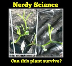 Nerdy Science: Do plants grow without leaves?