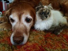 How to: Caring for Your Senior Cat or Dog http://www.foundanimals.org/pet-care/senior-pet-health