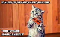 """These """"Top 28 Cat Memes Hilarious"""" are collected especially for cat lovers.If you are love cats then you are at right place at right time.Just read of these """"Top 28 Cat Memes Hilarious"""" and keep enjoy. Memes Humor, Funny Cat Memes, Funny Cats, Funny Animals, Cute Animals, I Love Cats, Crazy Cats, Cute Cats, Funny Shit"""