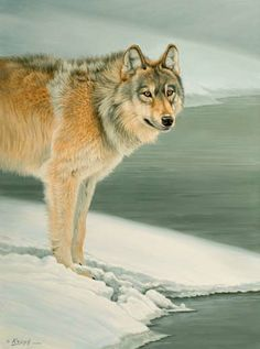 Wolf painting by artist Paul Krapf. Animal Paintings, Animal Drawings, Wolf Drawings, Lamar Valley, Wolf Artwork, Wolf Painting, Wolf Pictures, Wild Wolf, Outdoor Paint