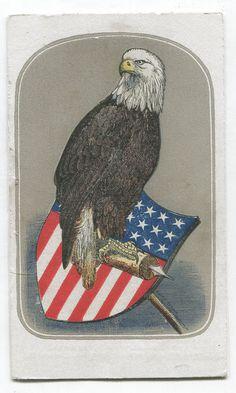 Civil War CDV Old Abe Eagle 8th Wisconsin Regiment 1865 Clean Carte de Viste   eBay