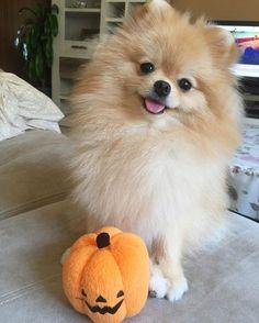 Benny has a pumpkin, too!