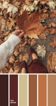 Brown autumn leaf color { Autumn Color Inspiration } - - A pretty autumn colour palette. To get you started on your own palette, we've created over 100 beautiful colour palettes with versatile colour schemes you can take. Fall Color Schemes, Color Schemes Colour Palettes, Fall Color Palette, Colour Pallette, Color Combinations, Brown Color Palettes, Fall Paint Colors, Rustic Color Palettes, Autumn Leaf Color