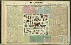 Tableau d'histoire naturelle Annelides, Crustaces, Arachnides, etc, 1834