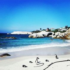 The penguins at Boulders beach stole my camera! But Neil chased him down for me! Cape Town Tourism, African Vacation, Boulder Beach, Vacation Places, Beautiful Places, Amazing Places, Bouldering, Mother Nature, Places To See