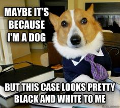 Lawyer Dog...honestly laughed for a good thirty seconds at this and i don't know why...