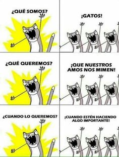 For our owners to spoil us! Mr Cat, Grumpy Cat, I Love Cats, Cool Cats, Crazy Cats, Soft Kitty Warm Kitty, Gatos Cats, Spanish Memes, Funny Spanish