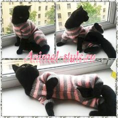 Купить Вязаные костюмы для котов и кошек - комбинированный, одежда для кошек, комбинезон для кошек, одежда для сфинксов
