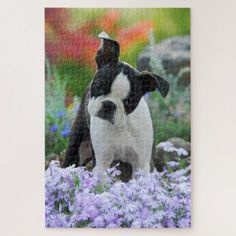 Boston Terrier Dog Cute Puppy Animal Head Photo -- Jigsaw Puzzle - diy cyo customize create your own personalize