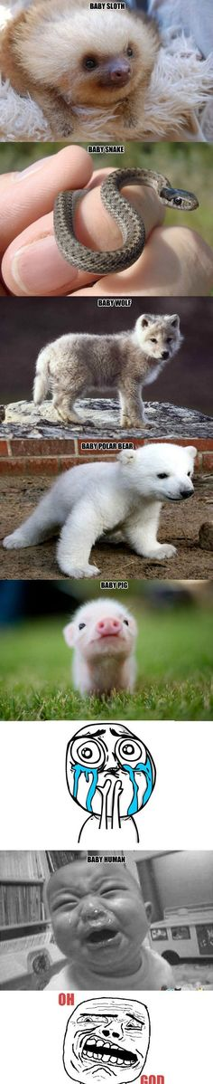 Baby Animals - www.funny-pictures-blog.com