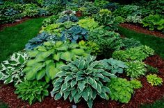 Beautiful variations of Hostas. Hostas are one my favourite plants and so easy to care for! Outdoor Gardens, Beautiful Gardens, Patio Garden, Shade Garden, Lawn And Garden, Plants, Hosta Varieties, Hosta Gardens, Planting Flowers