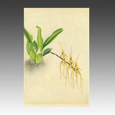 Ranka-Fu orchid series.  Zuigetsu Ikeda (1877-1944). 1946.