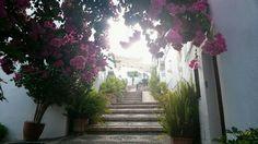 Spain, Day, Plants, Home Decor, Decoration Home, Room Decor, Sevilla Spain, Plant, Home Interior Design