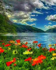 """636 """"Μου αρέσει!"""", 17 σχόλια - 135 (@zaahra135) στο Instagram: """"#بسم_الله_الرحمن_الرحيم🌸🌹 به نام خدای مهربانیها سلام بر شما مومنین  و روزه داران عزیز سلام مهمانان…"""" Golf Courses, Mountains, Artwork, Nature, Flowers, Travel, Hip Hop, Work Of Art, Naturaleza"""