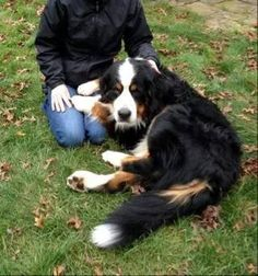 >> Falmouth, MA - Lost Brown w/White/Brown Dog   Mass 151 & Sandwich Rd   Solomon is missing. Be on the lookout for this missing boy and help him get home safe.  If you have seen him please call Deb at (508) 333-0138  Contact: https://www.facebook.com/capecodmissingpets/manager?tab=messages&mercurythreadid=user%3A1451670228&threadid=mid.1410272354930%3A4881997f0373550715&folder=inbox — at