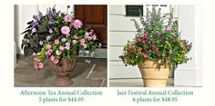 Container annuals collections from White Flower Farms.