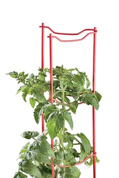Incredibly low-profile for the support they offer. Perfect for space-intensive gardening. Tomato Stakes, Tomato Cages, Tomato Ladders | Gardeners Supply