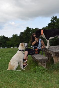 Alabai/ Central Asian Shepherd/dog