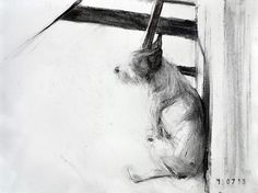 Mutley, 2013.  Charcoal on paper 27 x 37 cm