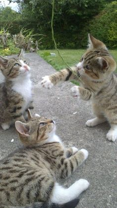 Three kittens playing in the garden. -