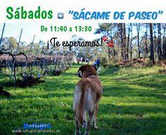 CORES DE CAMBADOS: O REFUGIO DE ANIMALES DE CAMBADOS DENUNCIA A USURP...