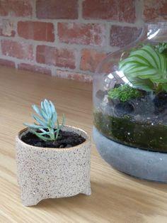 Indoor plants and terrariums / cantileverinteriors.com