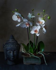 #cold porcelain flowers #orchid #handmade