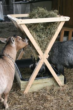 How to Build a Hay Feeder for sheep or goats or other small Livestock - Farm and Garden - GRIT Magazine Livestock Farming, Goat Farming, Goat Hay Feeder, Diy Hay Feeder, Hay Feeder For Horses, Cabras Boer, Goat Shelter, Goat Pen, Goat House