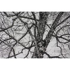 "Branches 10"" x 8"" solarplate etching ❤ liked on Polyvore featuring home and home decor"