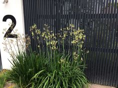 Vertical batten fence - My Gardening Tips 2019 Front Fence, Fence Gate, Fencing, Modern Landscaping, Outdoor Landscaping, Pool Shed, Fence Screening, Black Fence, Modern Fence