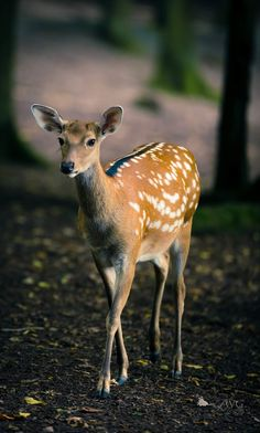 """* * """" Fer the millionish times; I iz a FAWN, notz ' Bambi. Forest Animals, Nature Animals, Woodland Animals, Animals And Pets, Baby Animals, Cute Animals, Deer Photos, Deer Pictures, Animal Pictures"""
