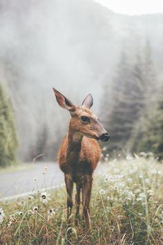 visualempire:  A Deer|   Dylan Furst   | VE