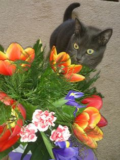 My cat loves flowers to :)