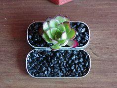 Altoids Tin Garden by Maruqe Cornblatt, gomistyle #Altoids #Garden #gomistyl#Marque_Cornblatt