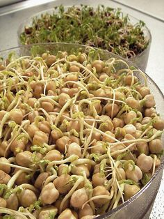 Grow Crunchy Sprouts Indoors : Outdoors : Home & Garden Television