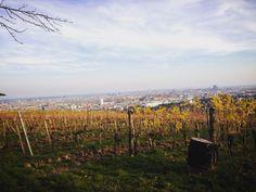 #wien #wilheminenberg #ottakring #vienna #wienblick #aussicht Photo Andrea PICKL Vienna, Vineyard, Mountains, Nature, Travel, Outdoor, Outdoors, Naturaleza, Viajes