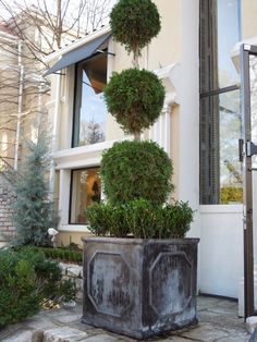 The French Tangerine: ~ boxwoods gardens and gifts