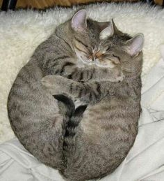 2 kitties are better than one!
